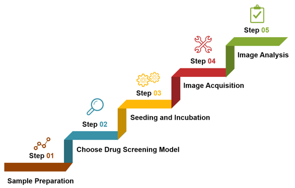 Key steps of our high content screening services.